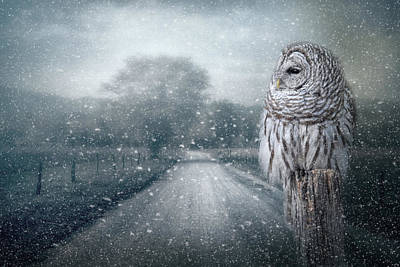 Photograph - The First Breath Of Winter by Jai Johnson