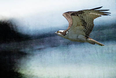 Photograph - The Flight Of The Osprey No. 1 Orig Vers by Belinda Greb