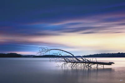 Photograph - The Floating Tree by Steven Llorca