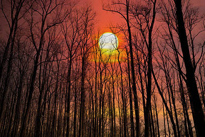 Photograph - The Forest Iat Sunset by Bill Cannon