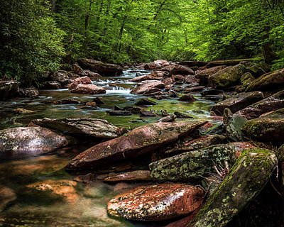 Photograph - The Forest Primeval by ProPeak Photography