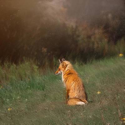 Photograph - The Fox Looks Away by Caroline Jensen