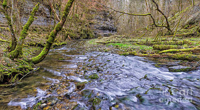 Food And Flowers Still Life - The Gauchach Gorge by Bernd Laeschke