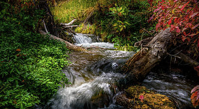 Photograph - The Giving Stream by TL Mair