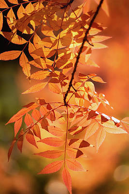 Photograph - The Glory Of Autumn Orange  by Saija Lehtonen