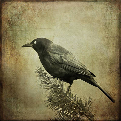 Photograph - The Grackle by Cathy Kovarik