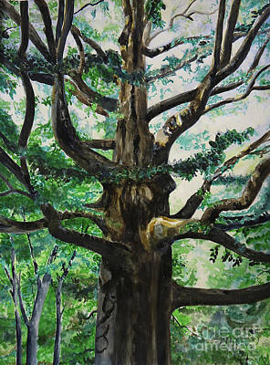 Painting - The Great Aged Beech by Michelle Curry