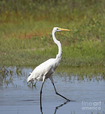 Photograph - The Great Egret  by Kerri Farley