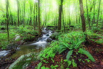 Photograph - The Green Forest by Bill Wakeley
