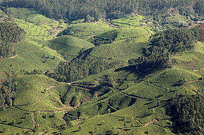 Kerala Photograph - The Green Hills Of Munnar - Tea by Photograph © Ulrike Henkys