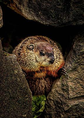 Photograph - The Groundhog by Bob Orsillo