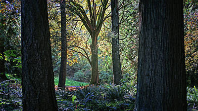 Photograph - The Grove by Cameron Wood