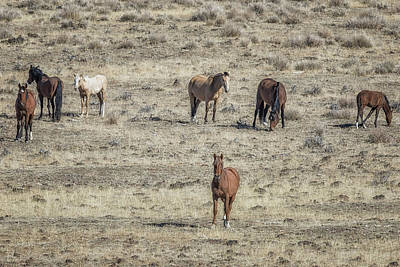 Photograph - The Harem Stallion And Most Of His Band by Belinda Greb