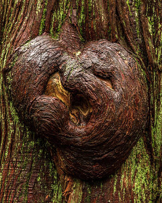 The Heart Of The Forest Art Print