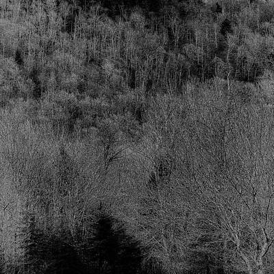 Photograph - The Hillside by David Patterson