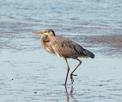 Photograph - The Hungry Heron by Loree Johnson