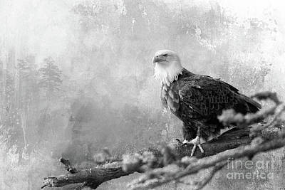 Photograph - The King Of Birds - Bw by Beve Brown-Clark Photography