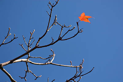 Ken Ilio Photograph - The Last Leaf During Fall by By Ken Ilio