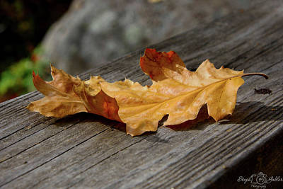 Photograph - The Last Leaf by Steph Gabler