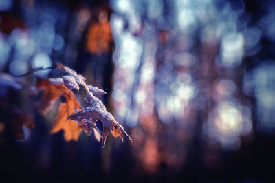 Photograph - The Light In The Woods by Marnie Patchett