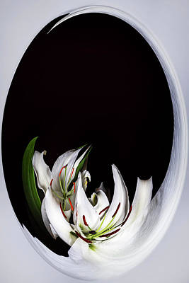 Digital Art - The Lily Whiirlpool by Cyndy Doty