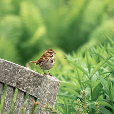 Photograph - The Little Sparrow by Caroline Jensen