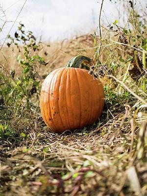Photograph - The Lone Pumpkin by Whitney Leigh Carlson