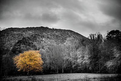 Photograph - The Lone Yellow Tree by Greg Mimbs