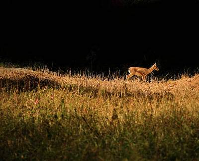 Bangalore Photograph - The Lonely Deer by Arindam Sen Photography