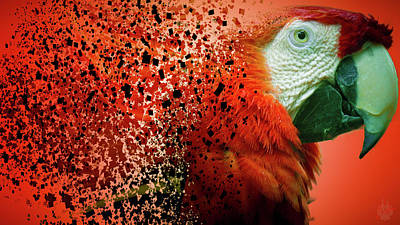Photograph - The Macaw by Elie Wolf
