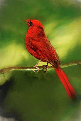 Photograph - The Male Cardinal by Kay Brewer