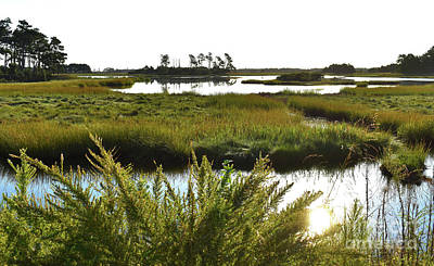 Photograph - The Marsh On Assateague by Skip Willits