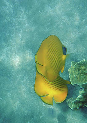 Photograph - The Masked Butterflyfish Turquoise by Johanna Hurmerinta