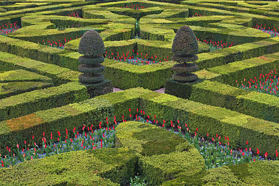 Photograph - The Maze Like Hedges At The Chateau Of by Julian Elliott Photography
