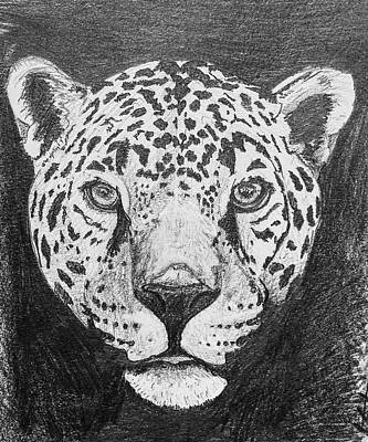 Animals Drawings - The Mighty Jaguar by Stephen Humphries