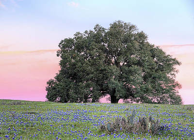 Photograph - The Mighty Oak And Bluebonnet Sunrise by JC Findley