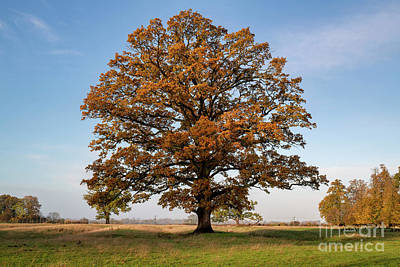 Photograph - The Mighty Seasonal Oak - Autumn by Tim Gainey