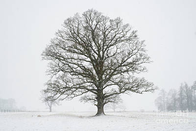 Photograph - The Mighty Seasonal Oak - Winter by Tim Gainey