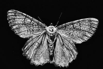 Photograph - The Moth Black And White by JC Findley