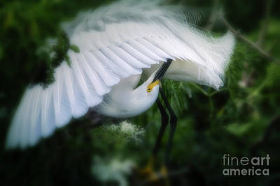 Photograph - The Nature Of Beauty by Mary Lou Chmura