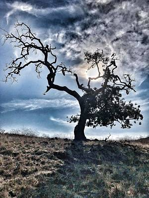 Photograph - The Old Oak II by John Rodrigues