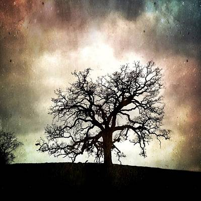 Photograph - The Old Oak IIi by John Rodrigues