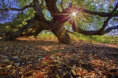Photograph - The Old Oak by John Rodrigues