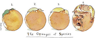 Painting - The Oranges Of Species by Barry Blitt