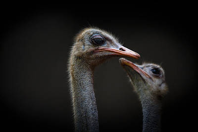 Photograph - The Ostrich by Christine Sponchia