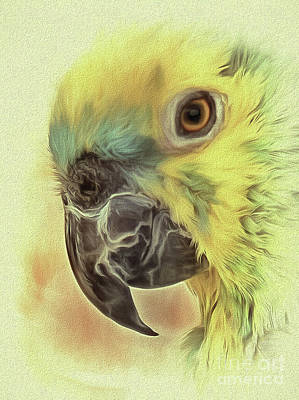 Photograph - The Parrot Sketch by Leigh Kemp