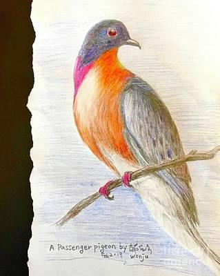 Drawing - The Passenger Pigeon  by Wonju Hulse