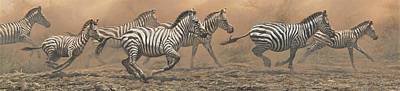 Animals Paintings - The Race - Zebras by Alan M Hunt