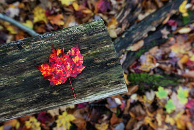 Photograph - The Reason They Call It Fall by Brad Wenskoski