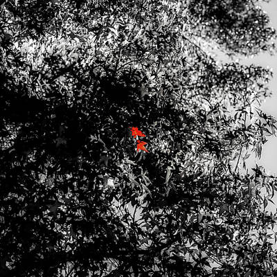 Photograph - The Red Heart Of The Tree by Joseph S Giacalone